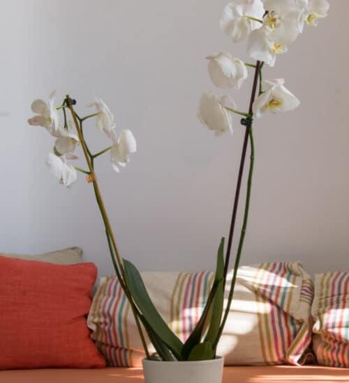 naxos-luxury-sea-suites-deluxe-1